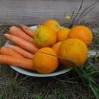 Orange carotte