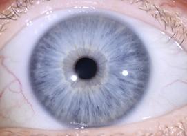 oeil-bleu