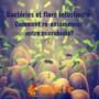 Bactéries et flore intestinale